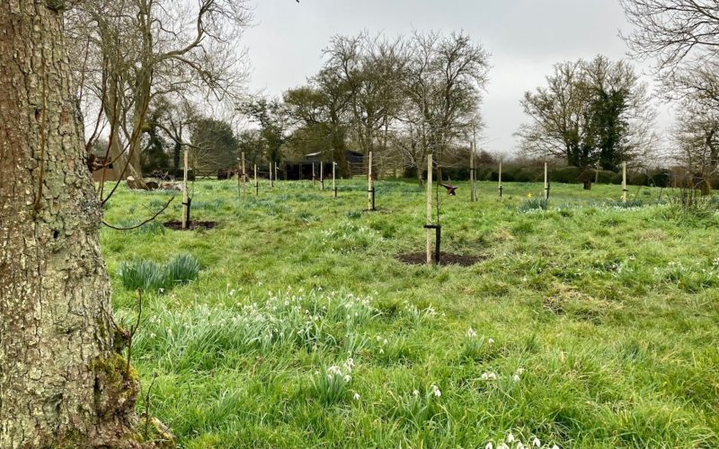 SIcon Foundation Supported Project - Kettleburgh Orchard 1